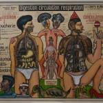 Digestion, circulation, respiration