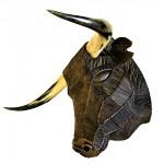 Tête de toro